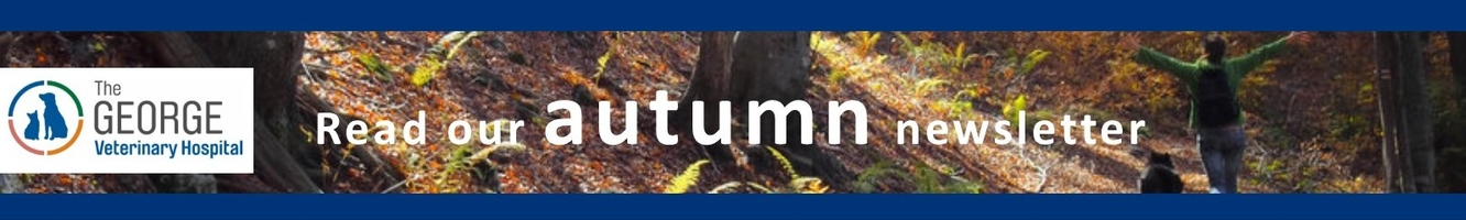 Autumn newsletter from the George Hospital team