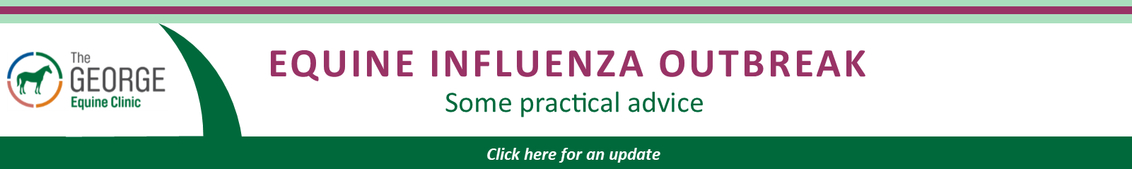 Equine Influenza advice